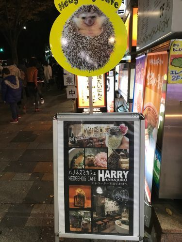 harry_harajuku